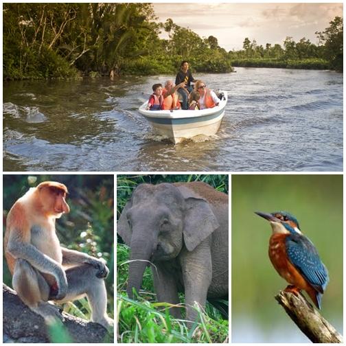 Maswings Borneo Kinabatangan Wildlife Close Up 3d